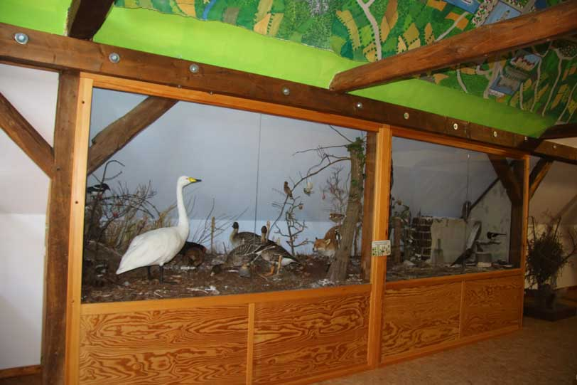 Elbe-Land-Museum, Live-Storch-TV, Fernsehen, Storchbeobachtung