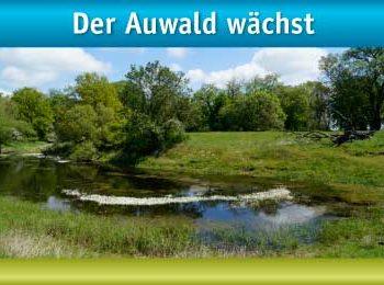 Der Auwald wächst, privates Engagement für Klima und Natur, weitere Auenbäume gepflanzt